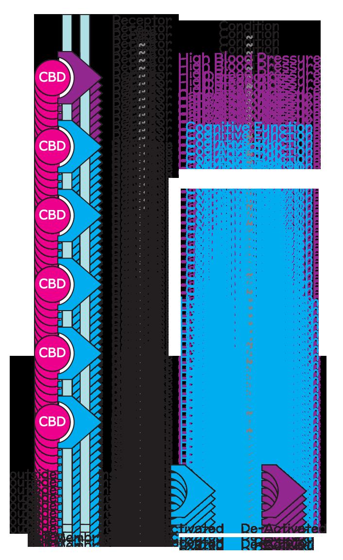 cbd-receptors_how-cbd-works_how-does-CBD-work_cbd-uses